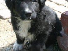 Sokö (Sokak Köpeği)