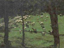 Koyun Ve Keçilerde önemli Hastaliklar (viral)