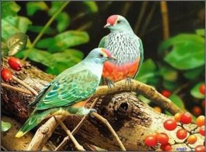 Renkli Güvercinler