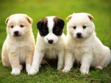sevimli köpek resimleri_1.jpg