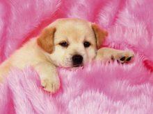 sevimli köpek resimleri_2.jpg