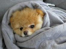 sevimli köpek resimleri_3.jpg