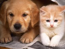 sevimli köpek resimleri_4.jpg