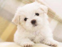 sevimli köpek resimleri_5.jpg