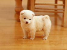 sevimli köpek resimleri_6.jpg