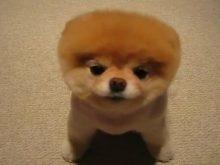 sevimli köpek resimleri_7.jpg