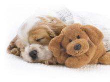 sevimli köpek resimleri
