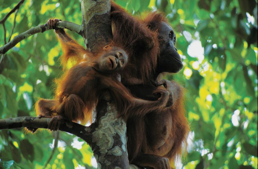 Sevimli maymunlar
