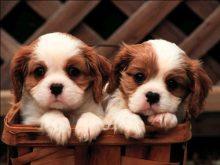Tatlı köpek resimleri