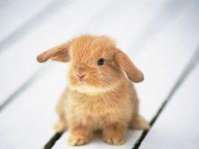 Yavru tavşanlar